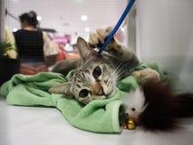 Niezidentyfikowany kot w klatce znajduje nowego dom obraz royalty free