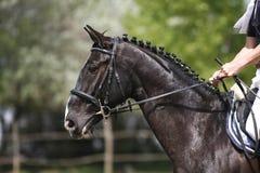 Niezidentyfikowany skokowy jeździec na horseback pokonuje bariery Obraz Stock