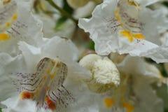 Nieziemscy kwiaty Zdjęcie Stock