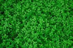 Niezliczeni świezi i zieleni liście Obrazy Stock