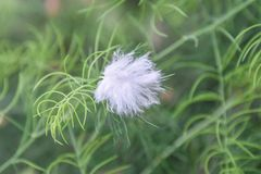 Nieznacznie biały opierzony ptak odizolowywający na zielonym drzewie, plamy natury zielony tło fotografia royalty free