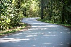 Nieznacznie zaświecająca droga w lesie obrazy royalty free