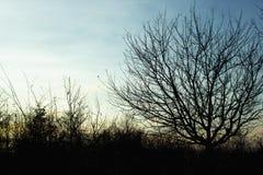 Niezwykła sylwetka piękny jesieni drzewo na tle o Zdjęcia Royalty Free