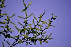 Niezwykły drzewo z żółtymi kwiatami Obrazy Royalty Free