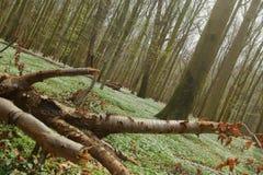 Niezwykły plandeka strzał ochraniający teren Zarabia Holz blisko Loissin, Mecklenburg-Vorpommern, Niemcy Obrazy Royalty Free