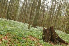 Niezwykły plandeka strzał ochraniający teren Zarabia Holz blisko Loissin, Mecklenburg-Vorpommern, Niemcy Fotografia Stock