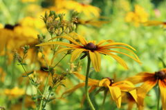 niezwykłe kwiat Zdjęcie Royalty Free