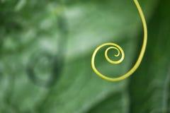 Niezwykle zakończenie up rośliny spirala - selekcyjna ostrość zdjęcia royalty free