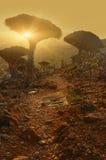Niezwykli endemiczni draconian i butelka drzewa Obrazy Royalty Free