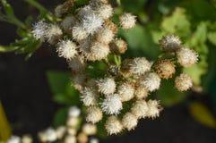 Niezwykli kwiaty Zdjęcia Royalty Free