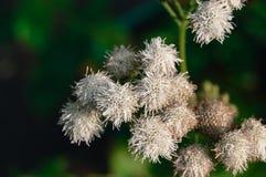 Niezwykli kwiaty Fotografia Royalty Free