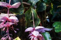 Niezwykli kwiaty Zdjęcia Stock
