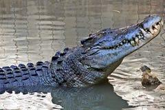 Nigdy ono uśmiecha się przy krokodylem Zdjęcie Stock