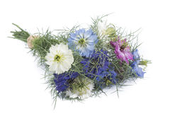 Nigella bouquet. With white, blue and purple flowers Stock Image