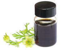 Nigella flower and essential oil in a glass bottle. Over white background Stock Image