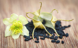 Nigella flower with seeds Stock Image