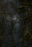 Night. Moon in  danger  winter forest Royalty Free Stock Photo