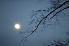 Night. Winter night with full moon and tree Stock Image