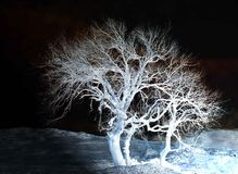 Night. Landscape of a tree in a cold night in the winter stock photography