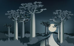 Night in the African baobab forest near the river 2 Stock Photos