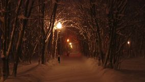 Night alley in the winter Park, street lamp lights falling snow. Night deserted alley in the snowy Park winter, lights light snow that falls from the trees in stock footage