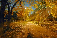 Night and autumn. Stock Image