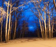 Night autumn forest Royalty Free Stock Photo