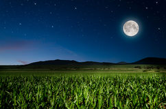 Night Background Royalty Free Stock Image