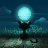 Night background with a cat and a moon Royalty Free Stock Images