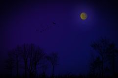 Night background concept migratory birds Stock Photography