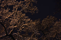 Night background snowy branches Royalty Free Stock Images