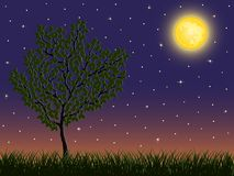 Night background with a tree Stock Image