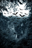 Night and bats in Halloween Royalty Free Stock Photos