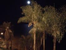 Night in the beach stock image