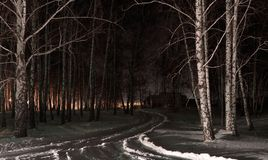 Night forest in the Dubinino village royalty free stock image