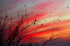 Night Birds Royalty Free Stock Photo