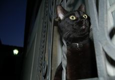 Night black cat. Black cat on window at night royalty free stock photos
