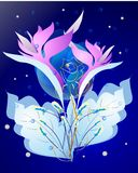 Night blossom Stock Image