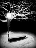 Night branch. In city park Royalty Free Stock Photography