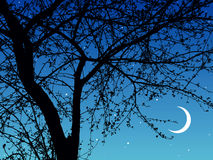 Night branches Royalty Free Stock Images