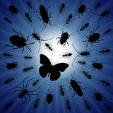 Night bugs. Bugs congregating around a light source at night Stock Photography