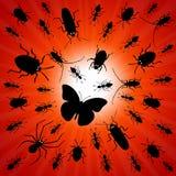 Night bugs Royalty Free Stock Image