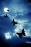 Night butterflies Stock Photography