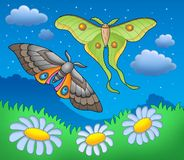 Night butterflies on meadow. Color illustration Stock Photos