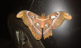 Night Butterfly stock photo