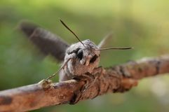 Night butterfly. On the branch of a plant Royalty Free Stock Photo