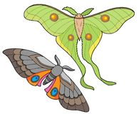 Free Night Butterfly Collection Royalty Free Stock Images - 5991689