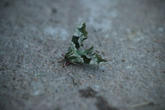 Night butterfly on the ground. Amazing look wings. Beautiful insect. Royalty Free Stock Photography