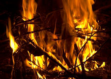 Night campfire. Bright campfire blazes In wood Royalty Free Stock Photo