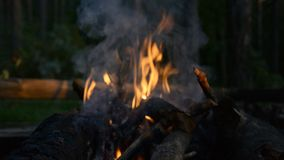 Night campfire flame. Hd stock footage stock video